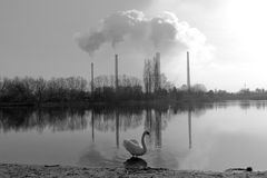 Swan. In the lake on the background of factories Royalty Free Stock Photography