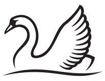 Swan. White swan, swan that swims Stock Photography