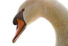 Free Swan Stock Photos - 2650633