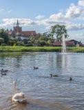 Swan湖 免版税库存图片