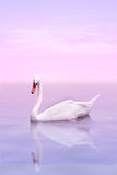 A swan. On a rose water Stock Images
