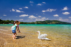 Swan. In the beautiful turquoise waters of the Lac du Paladru in France Royalty Free Stock Images
