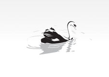 Swan. Vector Speed Swan nature illustration Stock Illustration
