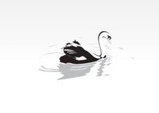 Swan. Vector Speed Swan nature illustration Royalty Free Stock Photo