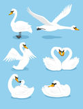 Swan action set. White Swan Wing Water Animal Bird Elegance Grace Set,  illustration cartoon Stock Photos