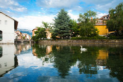 Swan Annecy Canal Wide Royalty Free Stock Image