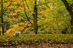 Swan in the autumn forest Stock Image