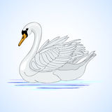 Swan. Aviculture and poultry. Vector illustration Royalty Free Stock Photo