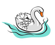 Swan with baby on her back. Vector illustration isolated on white background Royalty Free Stock Photos