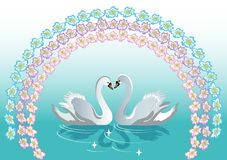 Swan backgrounds Royalty Free Stock Photography