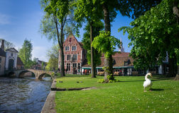 Swan at the Beguinage, Bruges, Belgium Royalty Free Stock Photos