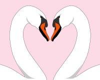 swan białych miłości Zdjęcie Royalty Free