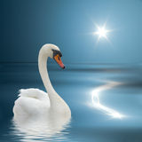 Swan on a blue water. Royalty Free Stock Photos
