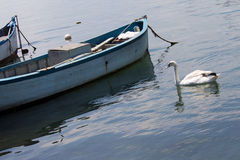 Swan and boat Stock Photos