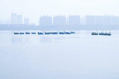 Swan boat Stock Image