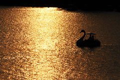 Swan boats is going to light Stock Photo