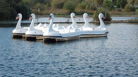 Model Swan Boats on a Lake Stock Photo
