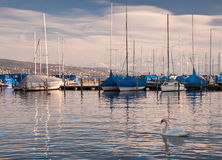 Swan and boats on the lake. View of the Zurich lake with boats and a swan Royalty Free Stock Images