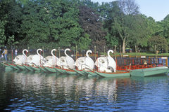 Swan Boats in Park, Boston, Massachusetts Royalty Free Stock Image