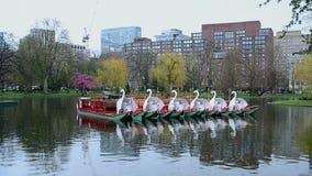 Swan Boats in pond of Boston Public Garden, Boston, USA, stock video footage