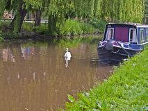 Swan and canal barge Stock Photos
