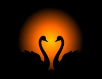 Swan couple in love. Illustration on dark background. Can use as wedding invitation cards , wedding / love related designs royalty free illustration
