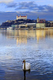 Swan couple lovers on Danube river, Bratislava castle and st. Ma Royalty Free Stock Photo