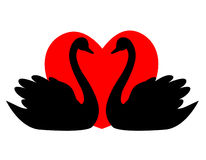 Swan Couple With Heart Stock Images