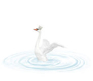Swan Stock Photography
