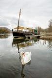 Swan at dordogne river Stock Photo
