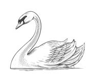 Swan in engraving style Stock Images