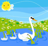 Swan family Royalty Free Stock Photos