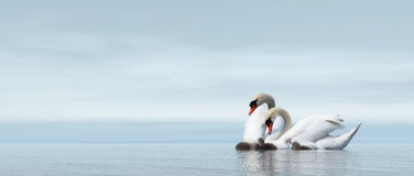 Swan family - 3D render Royalty Free Stock Photography