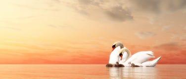Swan family - 3D render Stock Photos