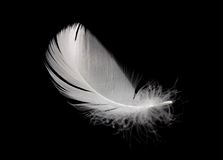 Swan feather. White swan feather isolated on black background Stock Photos