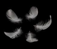 Swan feathers Royalty Free Stock Images