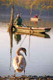 Swan and fishermen Royalty Free Stock Image
