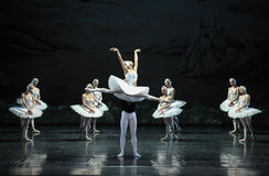 The Swan flew-The Swan Lakeside-ballet Swan Lake Stock Image