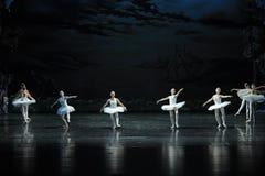 Swan flies over the lake-The Swan Lakeside-ballet Swan Lake Stock Photos
