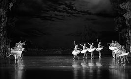 Swan flies over the lake-The Swan Lakeside-ballet Swan Lake Royalty Free Stock Images