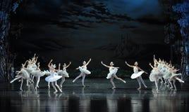 Swan flies over the lake-The Swan Lakeside-ballet Swan Lake Royalty Free Stock Photo