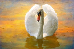 Swan floats on water. Swan with spread wings floats on colorful water with a canvas texture in background Stock Image