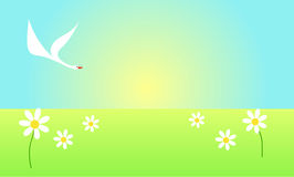 Swan flying over the flower field. White swan flying over flower field panorama Stock Image