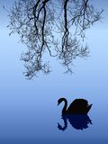 Swan in Fog. Vector drawing. Willow branches hanging in the mist over the lake, where swans swim Royalty Free Stock Image