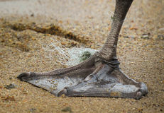 Swan foot with fishing line tied around it Stock Photo