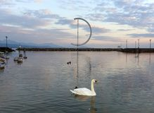 Swan on Geneva Lake in Lausanne, Switzerland.  Stock Photos