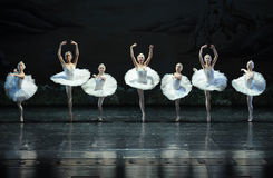 The Swan girl-ballet Swan Lake Stock Images