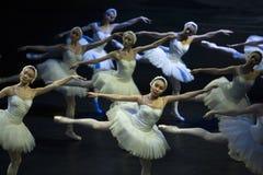 Swan girls Royalty Free Stock Image