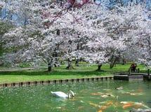 Swan & Goldfish Royalty Free Stock Image