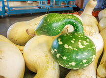 Swan Gourd Royalty Free Stock Image